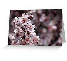 Japanese Cherry Tree (1) Greeting Card