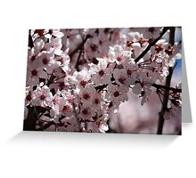 Japanese Cherry Tree (4) Greeting Card