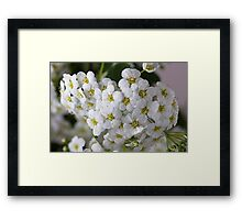 branch with flowers Framed Print