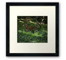 Deer in the Blue Bells Framed Print