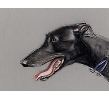 Black Greyhound Profile Photographic Print