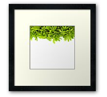 Green leaves frame isolated on white Framed Print