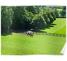 Horses grazing in Yorkshire Poster