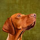 Mr Vizsla by Sparafuori