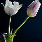 Tulip Pair by goddarb