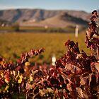 Fall Vines by williamsrdan