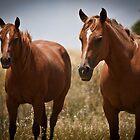 Horses by williamsrdan