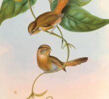 Birds of Asia John Gould 1883 V1 V7 221 Suthora Fulvifrous Sticker