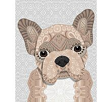Beige Frenchie Puppy 001 Photographic Print