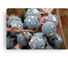 Wet Grapes Canvas Print