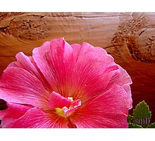 Pink Flowers and Old Timbers Photographic Print
