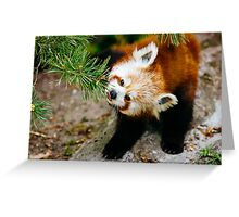 Red Panda Tongue Greeting Card