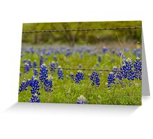 Bluebonnets & Barb Wire Greeting Card