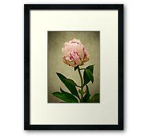 Peony Rose Framed Print