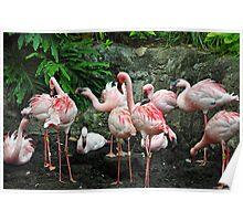 Pink Flamboyance Poster