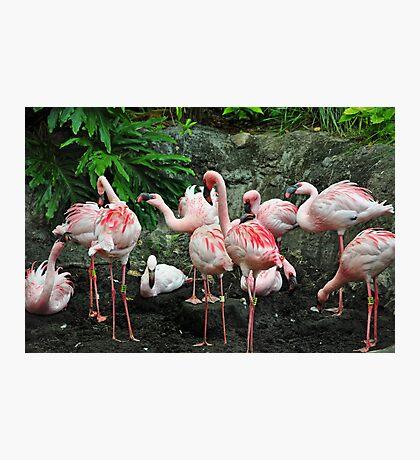 Pink Flamboyance Photographic Print