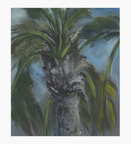 Blessed Shade-Palm Tree AC150603a Photographic Print