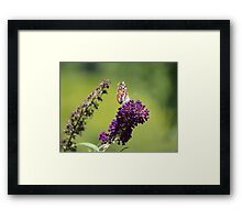 Butterfly With Flowers Framed Print