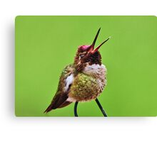 MONDAYS HUMMINGBIRD Canvas Print