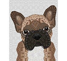 Brown Frenchie Puppy 001 Photographic Print