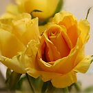 Mellow Yellow by mikequigley