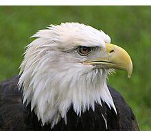 Minnesota Eagle Photographic Print