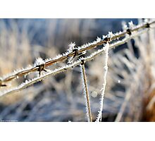 Frozen Barbed Wire Photographic Print