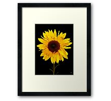 SUNFLOWER PRINT Framed Print