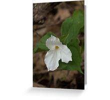 Spring Forest Walk Treasures - White Trillium Flower Greeting Card