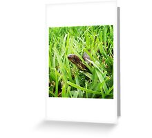 Beware Of Tiny Slithers Greeting Card