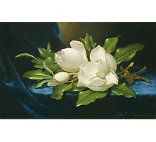 Martin Johnson Heade - Giant Magnolias On A Blue Velvet Cloth. Still life with flowers: flowers, hummingbird, nest, orchid,  lotus blossom, wonderful flower, forest, passion flowers, garden, magnolias Photographic Print