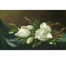 Martin Johnson Heade - Magnolias On Light Blue Velvet Cloth 1885. Still life with flowers: flowers, hummingbird, nest, orchid,  lotus blossom, wonderful flower, forest, passion, garden, magnolias Photographic Print