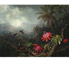 Martin Johnson Heade - Martin Johnson Heade. Garden landscape: garden view, trees and flowers, blossom,  lotus blossom, botanical park, orchid, wonderful flowers, sky, passion, magnolias, hummingbird Photographic Print