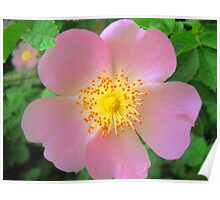 Spring Rose Hips Throw Pillows Poster