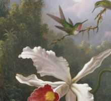 Martin Johnson Heade - Two Hummingbirds Above A White Orchid. Still life with flowers: hummingbird, nest, orchid,  lotus blossom, wonderful flower, forest, passion garden, magnolias Sticker