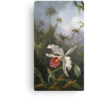 Martin Johnson Heade - Two Hummingbirds Above A White Orchid. Still life with flowers: hummingbird, nest, orchid,  lotus blossom, wonderful flower, forest, passion garden, magnolias Canvas Print