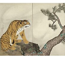 Maruyama okyo - Tiger. portrait Tiger: tiger on the tree, tree, striped, nature, strong, beast, animal, predator, mountain,  mountain tree, fly Photographic Print