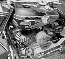 Black and White Harley by Perggals© - Stacey Turner