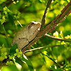 Peeping Tree Frog by peepholephotos