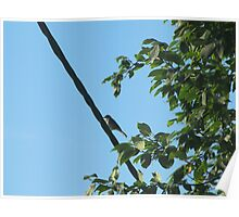 bird bird is the word :) Poster