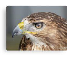 Red tailed Buzzard Profile Metal Print