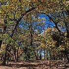 Tree Arch by CarolM