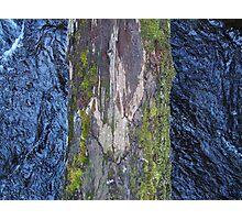 Log Bridge Photographic Print