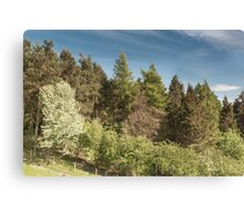 trees in the valley Canvas Print