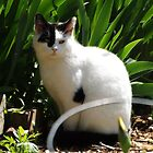 Cat Portrait, Brunswick Community Garden, Jersey City, New Jersey  by lenspiro