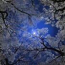 Moonlight Trees Pillow by Igor Zenin