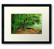 Walking in the May forest on a rainy day Framed Print