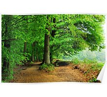 Walking in the May forest on a rainy day Poster