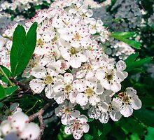 Flori by demonkourai