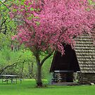 Springime in the Park by lorilee